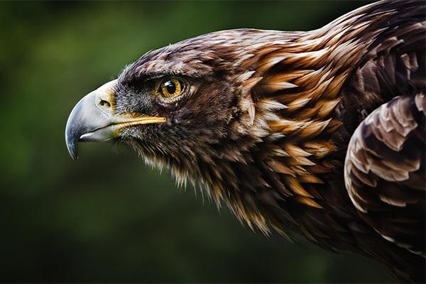 Орел — Стихи