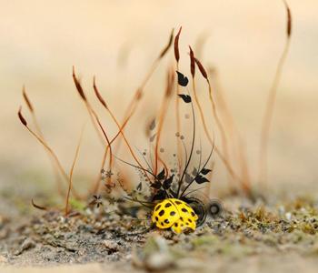 Жадный жук — стихотворение-жужжалка
